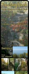 Forest Backgrounds Zip Pack 5 by FantasyStock