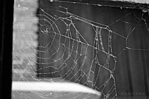 Just a web by LuciusThePope