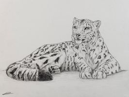 Snow Leopard Sketch by normanrawnart