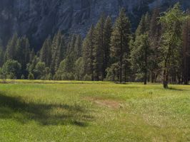 Meadow 01 by dappledstock