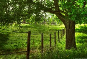 Vision In Green by Sigurd-Quast
