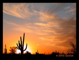 Classic Sonoran Saguaro Sunset by RooCat