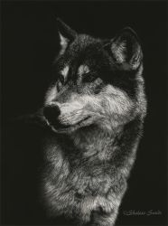 Timber Wolf Portrait - Scratchboard by ShaleseSands