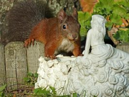 Squirrel 134 by Cundrie-la-Surziere