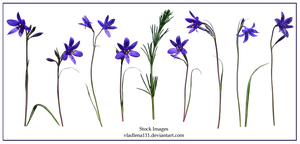 Spring flowers PNG 4 by Vladlena111