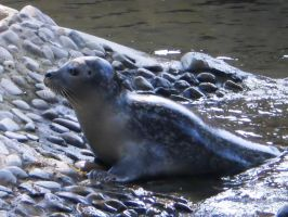 Seal by tinuvielluthien