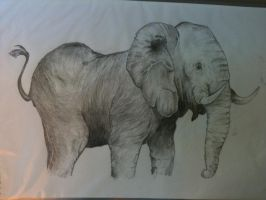 Elephant by sampeterson