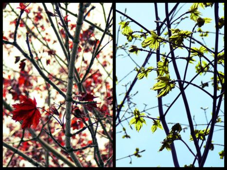 Colors Of Spring by BreAnn