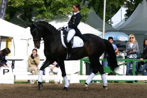 Dressage Competition Stock 1 by LuDa-Stock