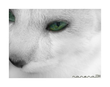 cat 1 by nanena