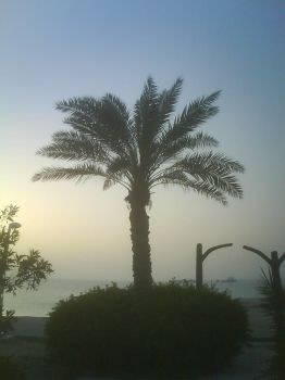 single palm by quillet
