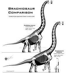 Brachiosaur comparison by Paleo-King