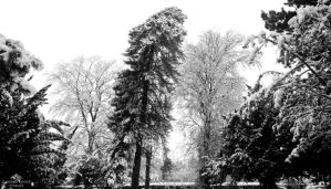 Southern snow by LordLJCornellPhotos