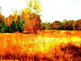 After the summer pick, in Fall by deep-south-mele