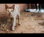 Urban Cats - 69 by MARX77