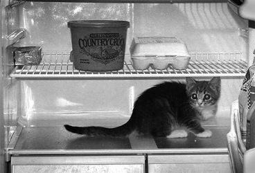 Curiosity Chilled the Cat by faithwalker