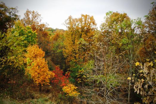 Fall in West Virginia by terminatortater