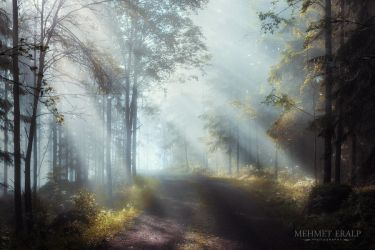 Enchanted Forest by m-eralp