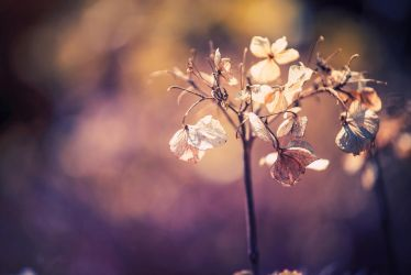 Fragile Beauty by Frank-Beer