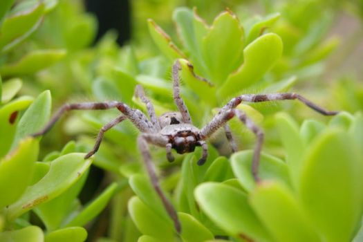 spider that sat on a plant6 by vjs