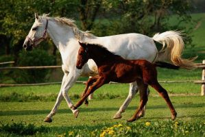 Mare with foal by martinahavlinova