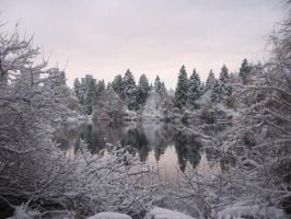 Stanley Park Winter by alejandrou2
