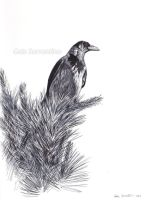 Hooded Crow sketch by makangeni