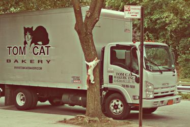 Tom Cat Bakery by photocopious