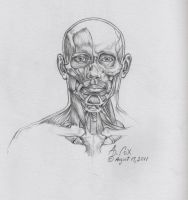 Anatomy-Head-Frontal by andrewcox