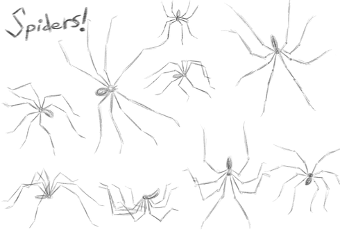Spider Sketches by EmuCat