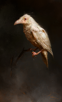 Crow by PigThroat