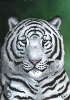 White tiger by TheWingedShadow