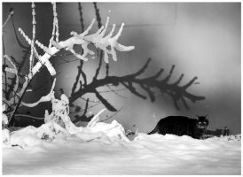snow, shadow and cat by Wilithin
