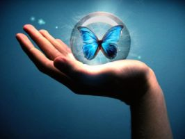 blue butterfly by 6yohan9
