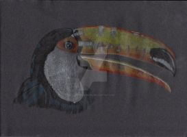 Toucan by Moondancer3