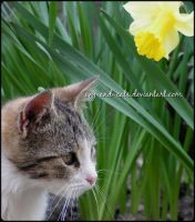589 by evy-and-cats