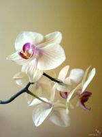 An Orchid by amala-lp