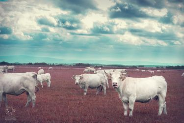 Mad Cows by SkyppySDK
