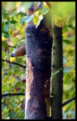 Nuthatch - Why hello there by Esmerelde