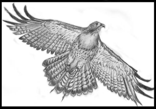 Redtail Soar by Fortunes-Favor