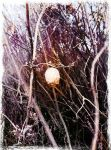 Seed Pod with Grunge Filter by ycrad64