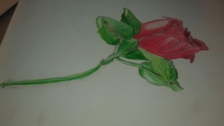 Color Pencil Shading: ClassPieces 3/3 by ODST-076