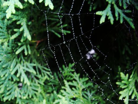 spider's web II by SmallSomething