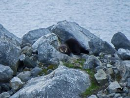 Inquisative River Otter by wolfwings1