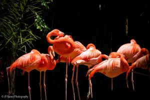 Flamingo Party by jpnunezdesigns