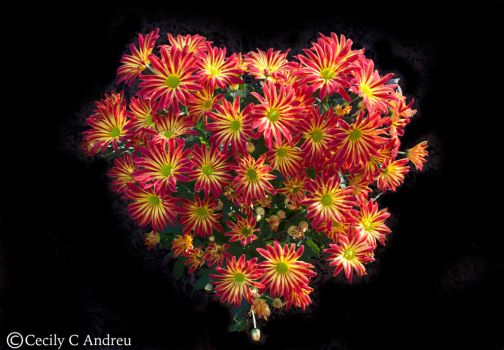 Chrysanthemums' Love To You by CecilyAndreuArtwork
