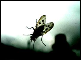 a fly by tomegatherion