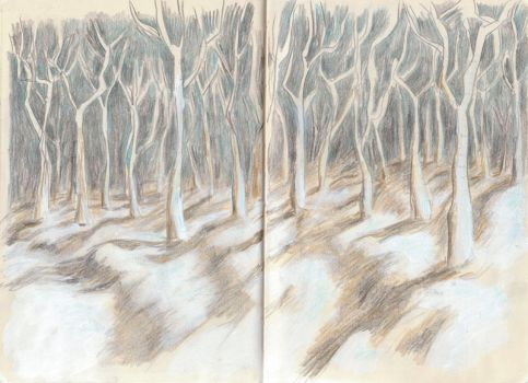 forest by koleman