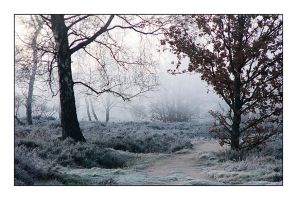 Going out on a frosty morning by jchanders
