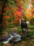 Autumn Tranquility by Emerald-Depths